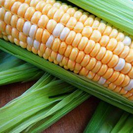 Мраморная F1 семена кукурузы суперсладкой Sh2 средней 77-79 дн. 22 см биколор (Мнагор)