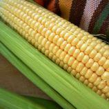 Дейенеріс (Барселона) F1 насіння кукурудзи суперсолодкої Sh2 ультраранньої 65-68 дн. 20 см 18-20 р. (Мнагор)