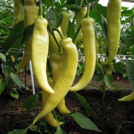Беларожец семена перца сладкого (Semo)