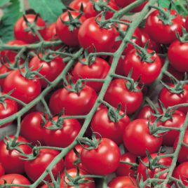 Биби F1 семена томата индет. черри (Semo)