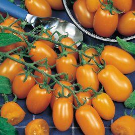 Датло F1 семена томата индет. черри раннего 50-60 дн. слив. 15-20 гр. желт. (Semo)