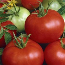 Діана насіння томату дет раннього окр 100-110 гр (Semo)