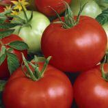 Диана семена томата дет. раннего окр. 100-110 гр. (Semo)