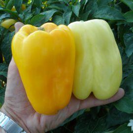 Гелби F1 семена перца сладкого (Semo)