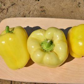 Гелби F1 семена перца сладкого тип Блочный среднего 70-80 дн. корот.куб. бел./желт. (Semo)