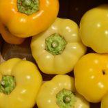 Яблина F1 семена перца сладкого (Semo)