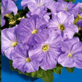Тритуния F1 небесно-синяя семена петунии грандифлора (Syngenta)