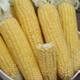 Лонга F1 семена кукурузы суперсладкой Sh2 среднеран. 20см 16-18р (Moravoseed)
