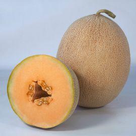КС 6147 (KS 6147) F1 семена дыни тип Ананас 65-70 дн. 2-2,5 кг ов. (Kitano Seeds)