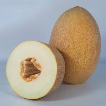 КС 6188 (KS 6188) F1 семена дыни тип Ананас средней 75-80 дн. 2,5-3,5 кг овал. оран./бел. (Kitano Seeds)
