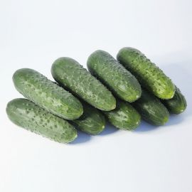 КС 70 F1 (KS 70 F1) семена огурца партенокарп. раннего 10-12 см (Kitano Seeds)