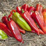 КС 2458 (KS 2458) F1 насіння перцю солодкого раннього тип Каппі зелен./черв. дліннокон. (Kitano Seeds)