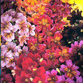 Либра Mixed семена сальпиглоссиса дражированные (Kitano Seeds)