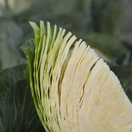Эластор F1 семена капусты б/к среднепоздней 100-110 дней 3,5-4 кг окр. (Syngenta)