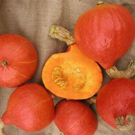 Хакайдо Оранжевый семена тыквы твердокорой ранней 80-90дн. 2-3кг (Semo)