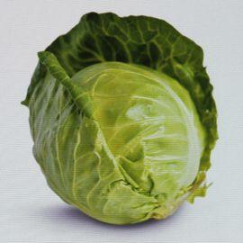 Глобус F1 (Globus F1) семена капусты б/к ранней (Seminis)