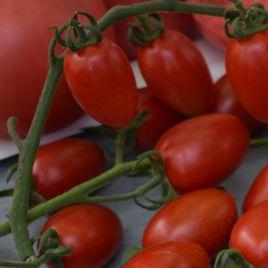 Люси Плюс F1 семена томата черри красного 20-25 гр. (Hazera)