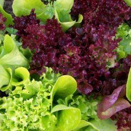 Примавера семена смеси 7-ми салатов (SAIS)