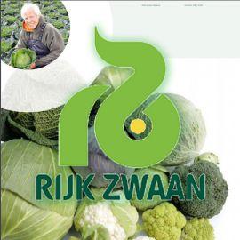 Технология выращивания белокочанной капусты от компании Rijk Zwaan