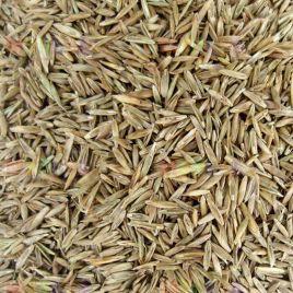 Овсяница луговая семена (Украина)