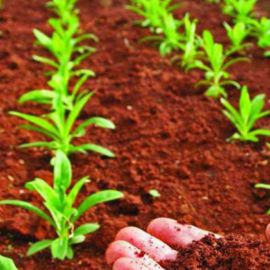 Для овощей универсальное миниральное удобрение (Деметра)