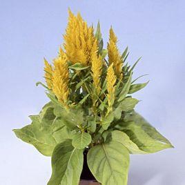 Айс Крем желтый семена целозии перистой однол. (Pan American)