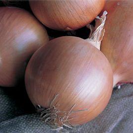 Дайтона F1 семена лука репчатого среднего 108дн (Bejo)