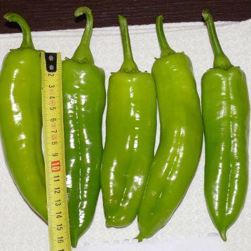 Сильви F1 семена перца сладого тип Венгерский раннего 60 дн. конич. 140-160 гр. зел./красн. (Lark Seed)