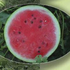 AGX 17-08 F1 семена арбуза раннего 59-64 дн. 9-10 кг (Agri Saaten)