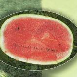 AGX 17-06 F1 семена арбуза среднераннего 72-78 дн. 16-18 кг (Agri Saaten)