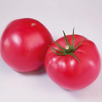 КС 1205 (KS 1205) F1 семена томата индет. раннего окр.-прип. розового 250-300г (Kitano Seeds)