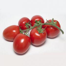 КС 3819 F1 (KS 3819 F1) семена томата индет. раннего слив. 100-120г (Kitano Seeds)