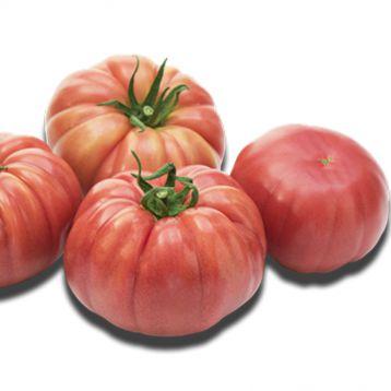 Пинк Кой F1 семена томата индет. розового 300-320г (Yuksel)