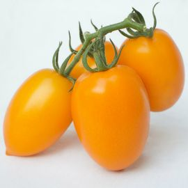 КС 1430 (KS 1430) F1 семена томата индет. раннего слив. 100-120 г желт. (Kitano Seeds)