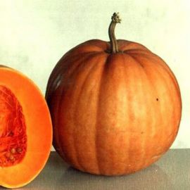 Гилея семена тыквы крупноплодной средней 100-120дн. 6-9 кг (Украина СДБ)