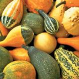 Веселка семена тыквы декоративной (Satimex)