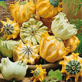 Корона семена тыквы декоративной (Satimex СДБ)