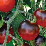 томат найт рейн