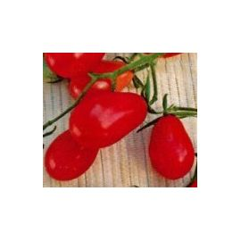 Розалита семена томата индет. раннего 90-100 дн. груш. 10-13 г. роз. (Украина СДБ)