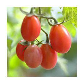 Розалита семена томата индет. ранний 10-13 г. роз. (Украина)