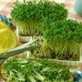 Кресс-салат семена (Satimex СДБ)