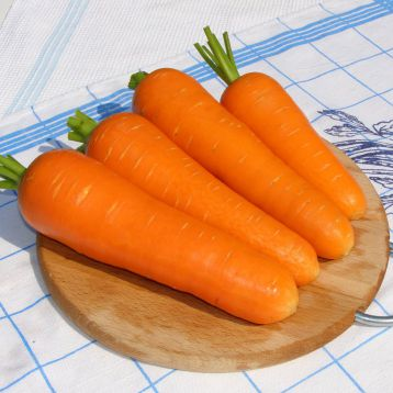 Виктория F1 (Victoria F1) семена моркови Шантане ранней 80 дн. (Seminis) НЕТ ТОВАРА