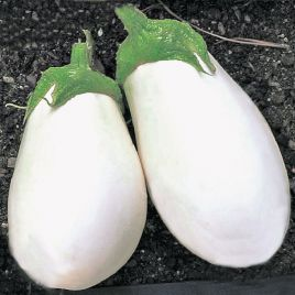 Вайт Эгг семена баклажана среднего 20 см бел. овал. (Satimex СДБ)
