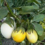 Голден Эгс семена баклажана декоративного (Hem Zaden ПН)