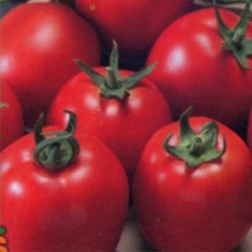 томат щедрик