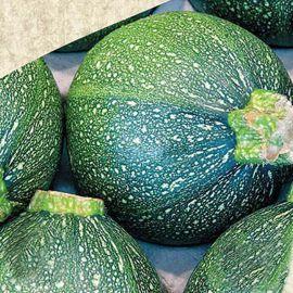 Зеленый Шар семена кабачка округ. темн.зел. (Satimex СДБ)