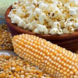 Поп корн семена кукурузы попкорн (Украина СДБ)