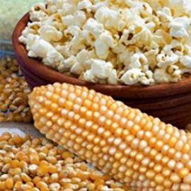 Поп корн семена кукурузы лопающейся (Украина)