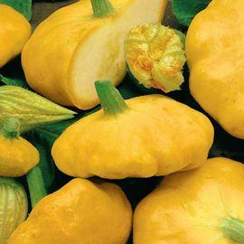 Желтый диск семена патиссона раннего желт. (Satimex СДБ)