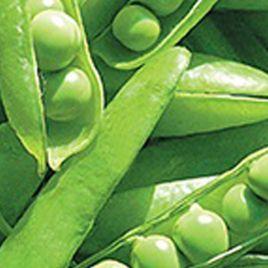 Джесика семена гороха сахарного среднеспелого 55-65 дн (Satimex СДБ)